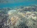 Giải cứu biển