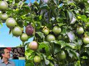 Bầu Đức bán trái cây mỗi ngày lãi hơn 2 tỉ đồng