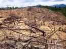 Chủ tịch tỉnh yêu cầu tìm cho ra kẻ chủ mưu phá rừng