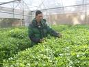 Người trồng xà lách xoong thuỷ canh duy nhất ở Đà Lạt