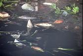 Cá chết nổi quá trời trên kênh Nhiêu Lộc