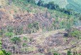 Đổ xô phá rừng chiếm đất