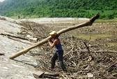 Sao không trả nợ rừng?