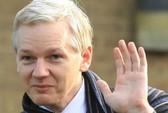 Ông chủ WikiLeaks tranh ghế thượng nghị sĩ Úc