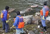 Hàng ngàn heo chết trôi sông, dân Trung Quốc hoang mang