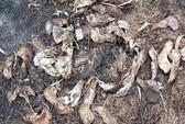 Dập lửa, phát hiện 1.000 hộp sọ chó