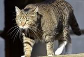 """Mèo của bộ trưởng Anh là """"gián điệp Trung Quốc""""?"""