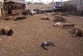 LHQ: Vũ khí hóa học đã được sử dụng ở Syria