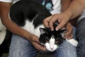 Mexico: Mèo chạy đua tranh cử chức thị trưởng