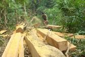 Đóng cửa rừng để cứu rừng