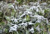 Sa Pa: Nhiệt độ xuống thấp hơn vào Noel