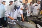 Lô cá ngừ đại dương đầu tiên của Bình Định lên máy bay đi Nhật