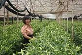 Tỉ phú nông nghiệp công nghệ cao
