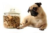1000 con chó Mỹ chết vì đồ ăn Trung Quốc