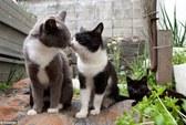 """""""Thiên đường mèo"""" ở Nhật Bản"""