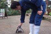 Bé chim cánh cụt
