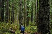 Cụ bà 78 tuổi đi lạc hơn 3 ngày trong rừng