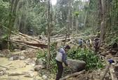 Xới tung rừng tìm vận may