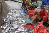 Xuất khẩu thủy sản vẫn lạc quan