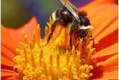 Phấn ong có nhiều công dụng