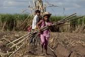 Lao động hợp pháp ở Bolivia: 10 tuổi là đủ