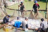 Doanh nghiệp xuất khẩu cá tra dọa đóng cửa