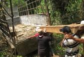 Kỷ luật nhiều cán bộ để mất rừng