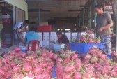 Thanh long Việt Nam gây sốt ở Ấn Độ, nhập khẩu tăng 20 lần