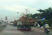 Kiểm lâm giải cứu gỗ lậu?