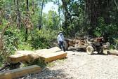 Nhân viên bảo vệ rừng tiếp tay lâm tặc