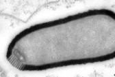 Virus khổng lồ sống lại sau 30.000 năm