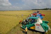 Áp lực gạo giá thấp từ Thái Lan