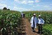 Dọn đường cho FDI vào nông nghiệp