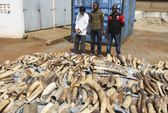 Togo bắt người Việt buôn lậu gần 4 tấn ngà voi