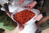 20 tấn mì chính và ô mai Trung Quốc tuồn về dịp Tết