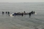 An táng cá voi Trường Sa tại đảo Lý Sơn