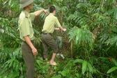Thả 4 con khỉ mặt đỏ về môi trường tự nhiên