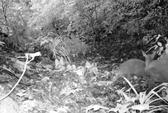 Loài thú tuyệt chủng 85 năm trước trên thế giới xuất hiện tại Việt Nam