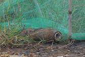 TP HCM: Bom đặt bên lề đường