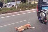 Cư dân mạng Trung Quốc truy tìm kẻ hành hạ chó