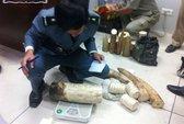 Campuchia bắt 2 người Việt buôn lậu ngà voi