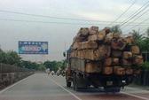 Vụ kiểm lâm Tiền Giang giải cứu gỗ lậu: Bỏ lọt tội phạm