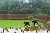Gần 1/5 đất nông nghiệp Trung Quốc nhiễm độc