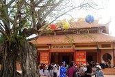 Phú Yên: Cây bồ đề đền thành hoàng là Cây Di sản