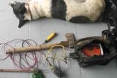 Trộm chó lộng hành vùng nông thôn