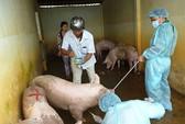 Siết chặt quản lý thức ăn chăn nuôi