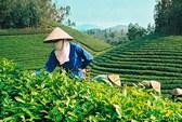 'Cởi trói' cho đại gia rót tiền vào nông nghiệp