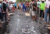 Nạo vét vịnh, tôm cá chết hàng loạt