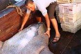 Ngư dân bắt được cá mặt trăng khủng ở Trường Sa