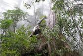 15 tỉ cây bị đốn hạ mỗi năm